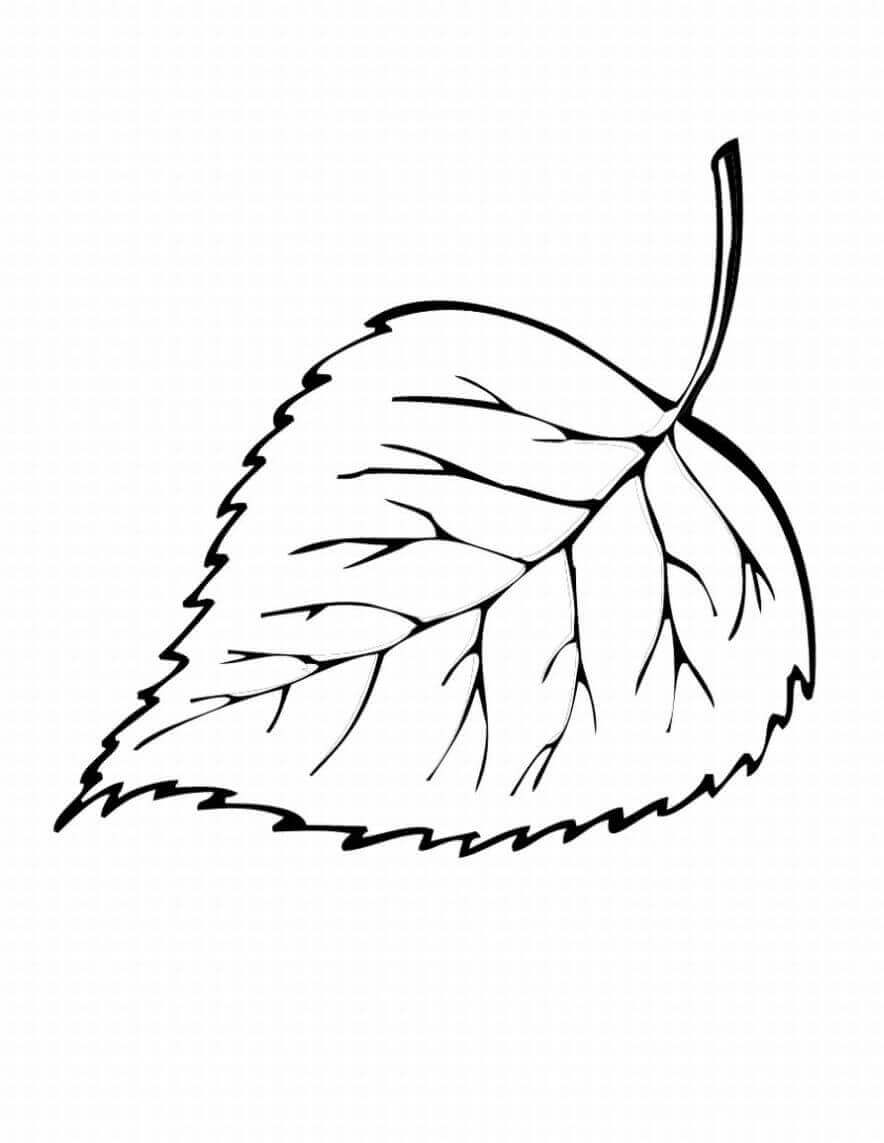 Autumn Or Fall Leaves Coloring Pages Free Printable - Coloring Junction