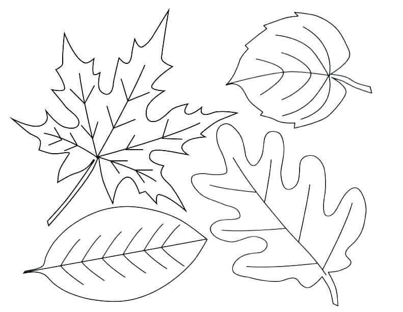 Autumn Or Fall Leaves Coloring Pages Free Printable – Coloring Junction