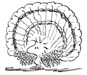 Woodstock As Turkey Charlie Brown Thanksgiving Coloring Page